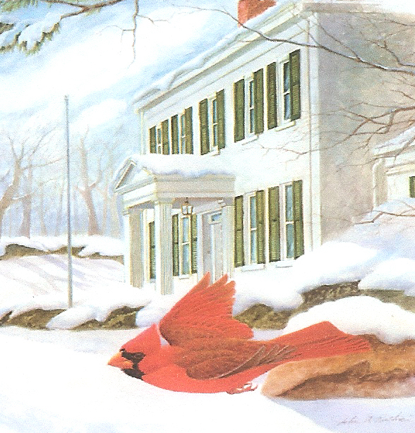 Cardinal at Dusk by John A. Ruthven Limited Edition signed and numbered Image print
